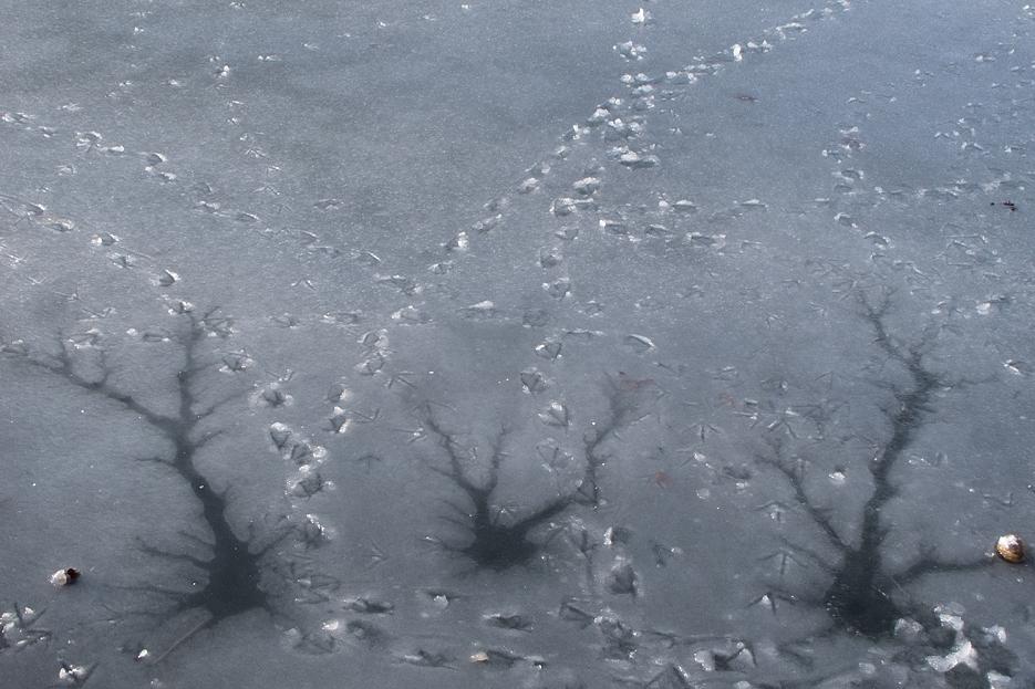 Fuglespor på isen